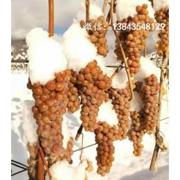 公主白葡萄酒 威代尔冰葡萄酒 加拿大冰葡萄酒